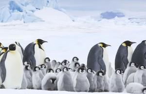 la-marcia-dei-pinguini-2-il-richiamo